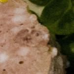 cropped-cropped-cropped-kachna-2.jpg